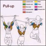 trapezius muscles targeted by pullups